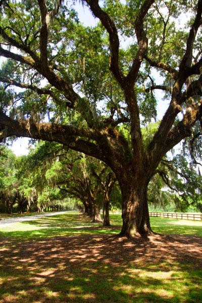 Charleston Oaks 6