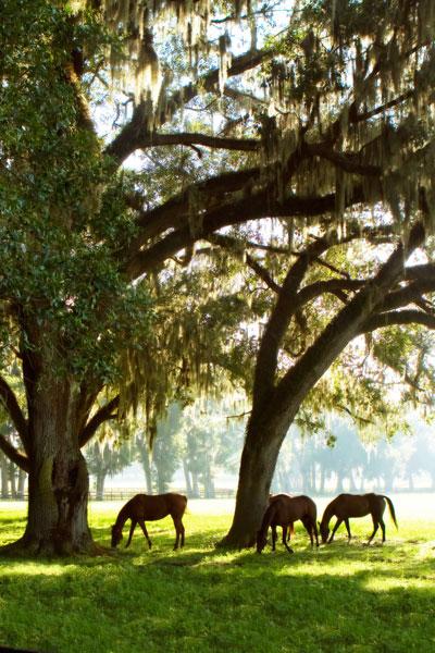 Horses in the Sunrise 5