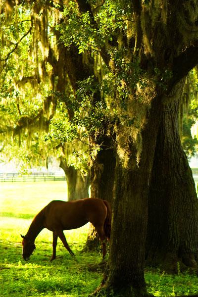 Horses in the Sunrise 7