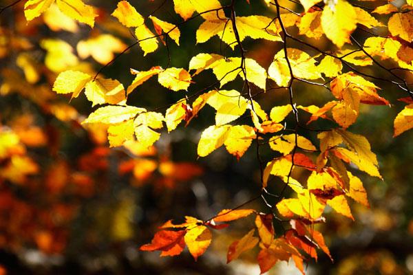 Autumn Leaves 2
