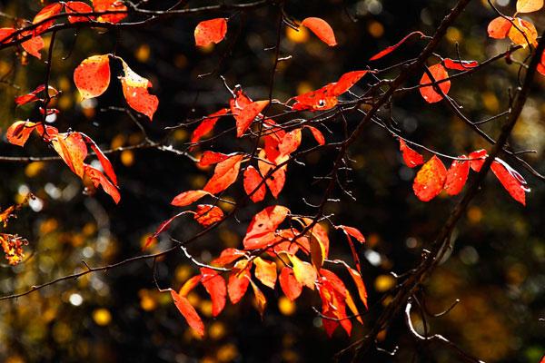 Autumn Leaves 6