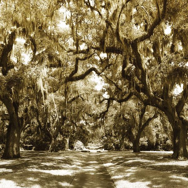 Druid Oak Square I