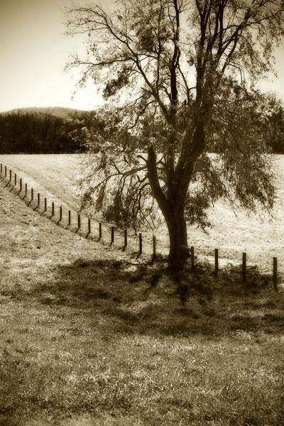 Rolling Pastures II