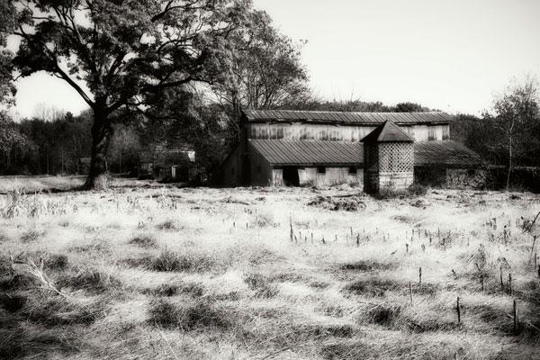 Fallow Fields I