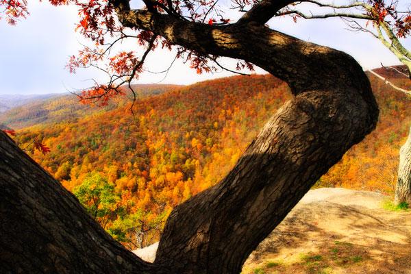 Wildcat Ridge I