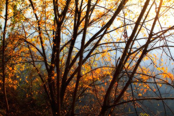 Leaves of Orange III