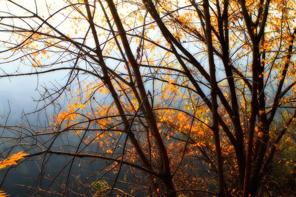 Leaves of Orange IV