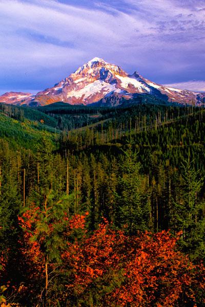 Mt. Hood IV