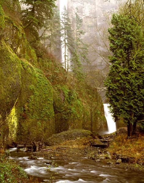 Multnomah Falls Creek Side