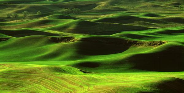 Palouse Green