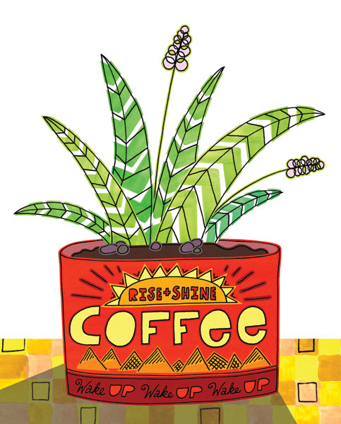 Coffee Can Succulent II
