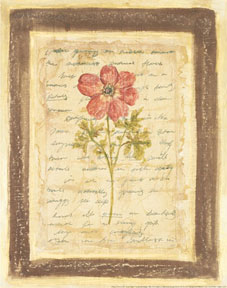Garden Notes I